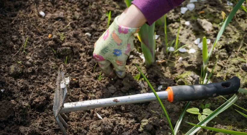 A gloved hand is pulling weeds from soil.