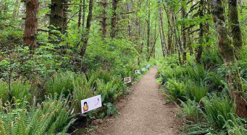 a path through a forest with StoryWalk signs alongside the path.