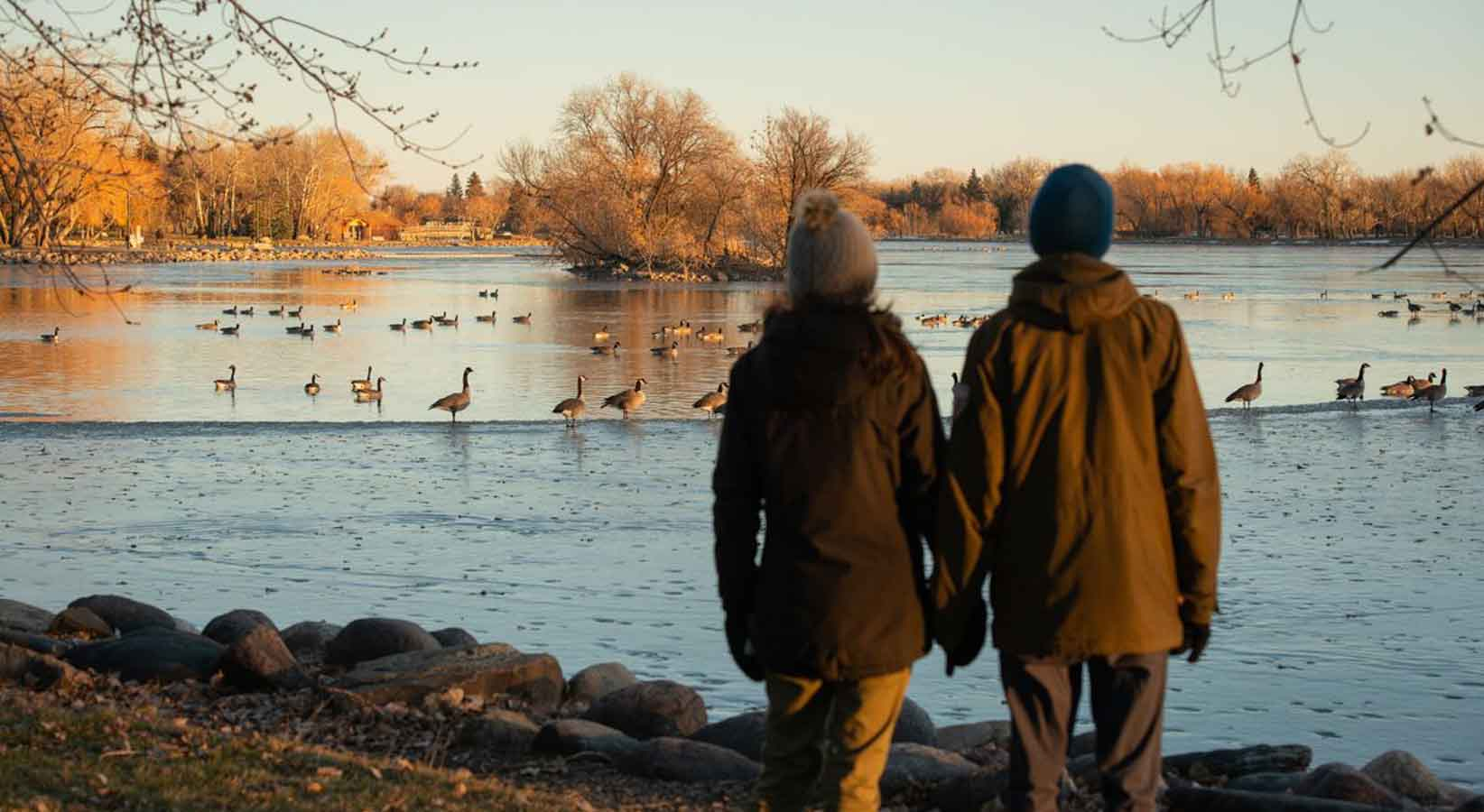 The back of two people holding hands looking at waterfowl on a pond in Lethbridge, Alberta.